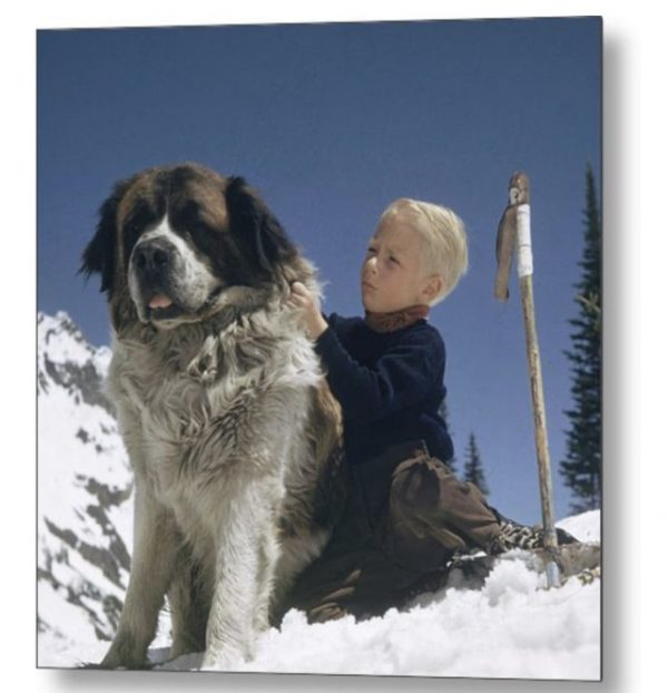 Skiing With A St Bernhard by Slim Aarons
